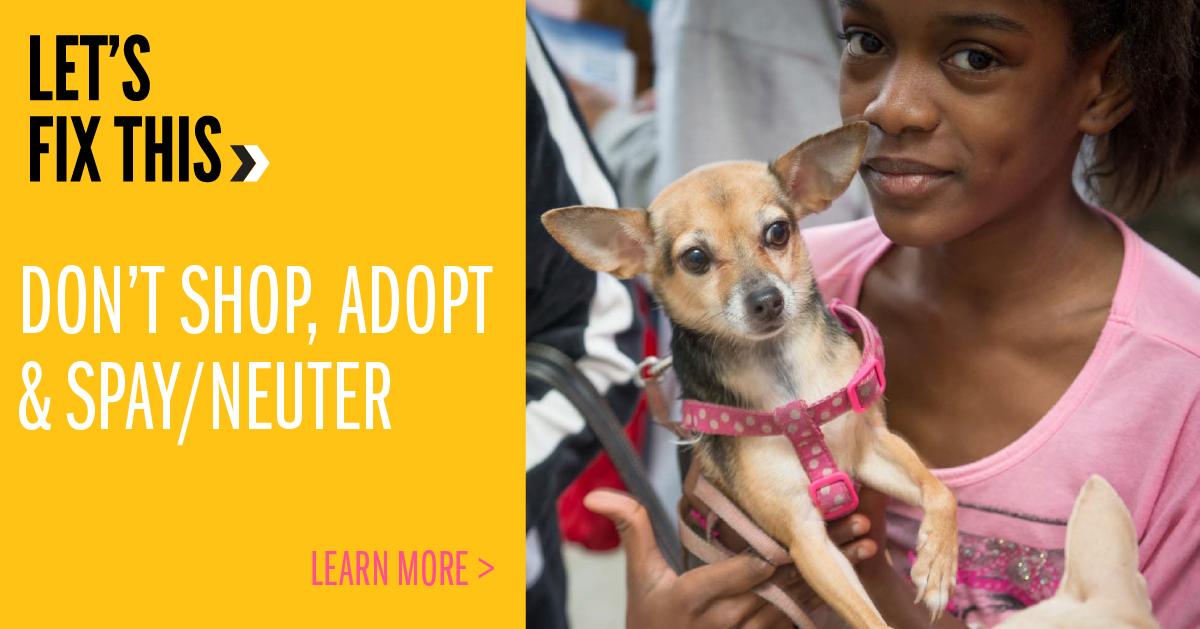 Don't Shop Adopt