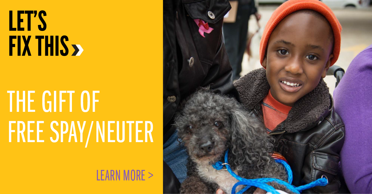 The Gift of Spay/Neuter